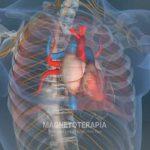 Auxilia na prevenção de doenças cardiovasculares