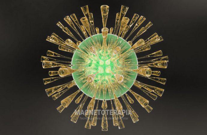 Aumenta a defesa imunológica